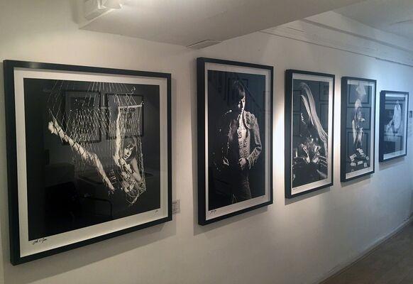 Birds of Britain: Photographs by John d Green, installation view