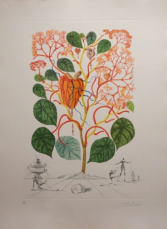 Salvador Dalí, 'Flora Dalinae Begonia', 1968, Print, Etching, Fine Art Acquisitions Dali