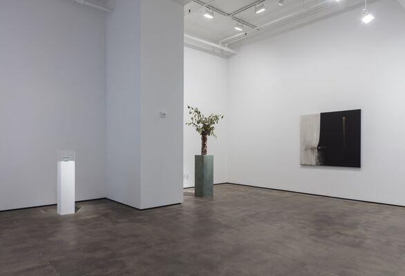 Abstract by Nature, installation view