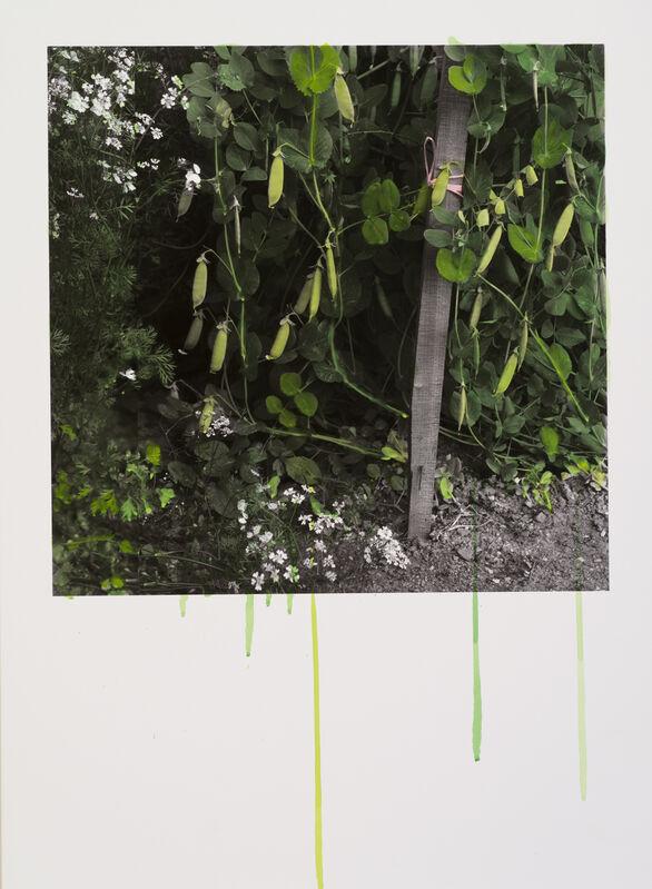 Honggoo Kang, 'Study of Green-Green Pea', 2012, Mixed Media, Acrylic on pigment print, ONE AND J. Gallery