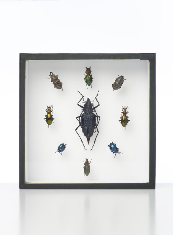 Damien Hirst, 'Nine Beetles', 2014, Mixed Media, Entomology specimens with glass fronted case, Omer Tiroche Gallery