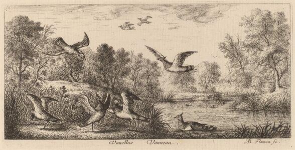 Albert Flamen, 'Vanellus, The Lapwing'
