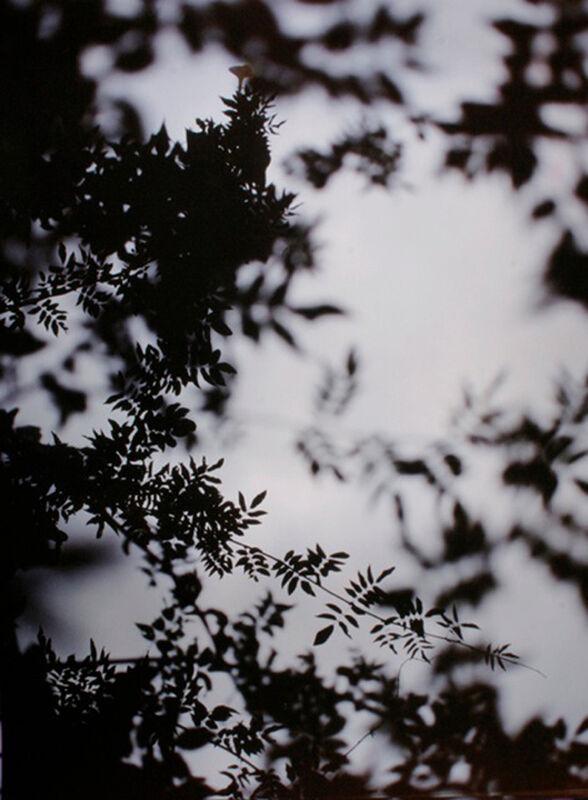 Bryan Graf, 'Wysteria 1', 2011, Photography, Chromogenic Print, Yancey Richardson Gallery