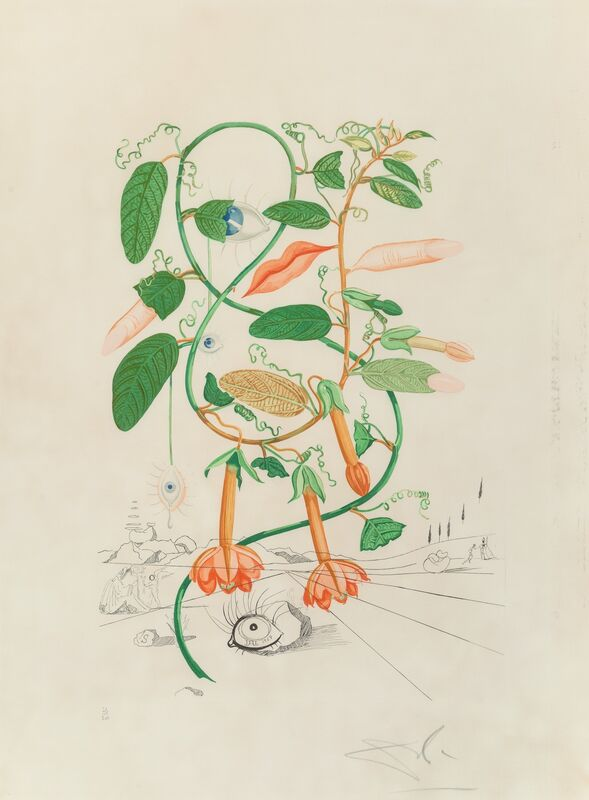 Salvador Dalí, 'Pisum sensuale, from Flora Dalinae', 1968, Print, Photolithograph in colors on Rives BFK paper, Heritage Auctions