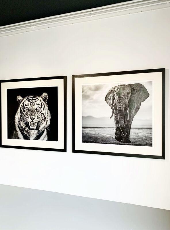 Cameron Yarrow, 'Nine Lives', 2019, Photography, Archival pigment print, Kunsthuis Amsterdam