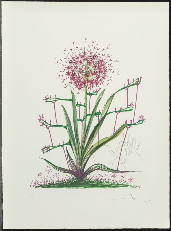 Salvador Dalí, 'Cactus les Bequilles, from Florals', 1972, Print, Lithograph in colors on heavy Arches paper, Heritage Auctions