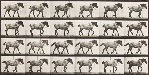 """Eadweard Muybridge, '""""Hansel"""" walking, free', 1887"""