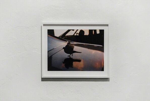 "David Black: ""Landscapes"", installation view"