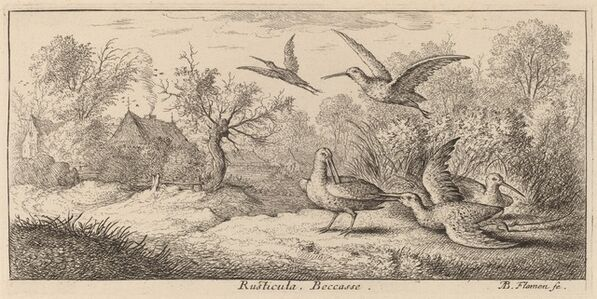 Albert Flamen, 'Rusticula, The Woodcock'