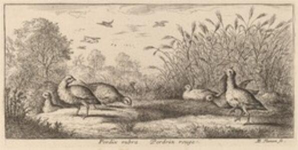 Albert Flamen, 'Pedrix rubra, The Red-Legged Partridge'