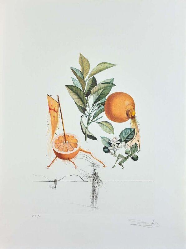 Salvador Dalí, 'Flordali - Pamplemousse Erotique', 1969, Print, Original etching on Rives paper, Samhart Gallery
