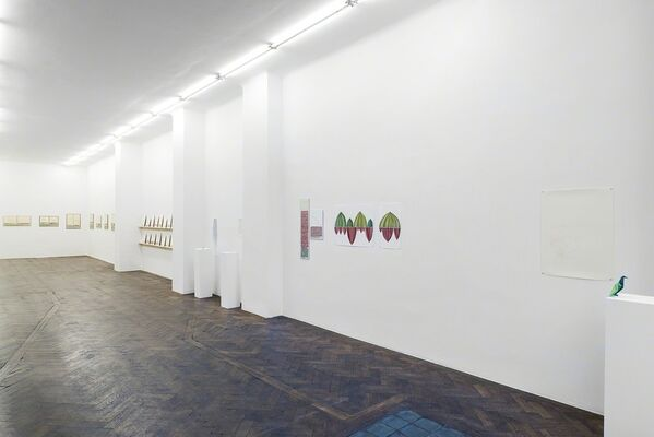 Danica Phelps, installation view