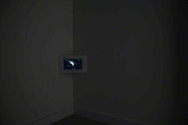 Cameratrap : Linda Tegg, installation view
