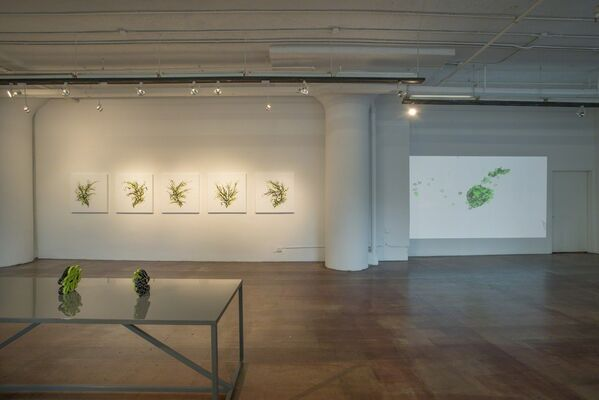 The Lagoglyph Series, installation view