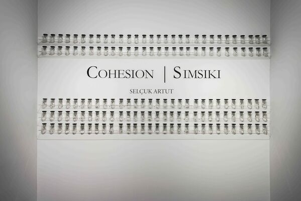 Cohesion, installation view