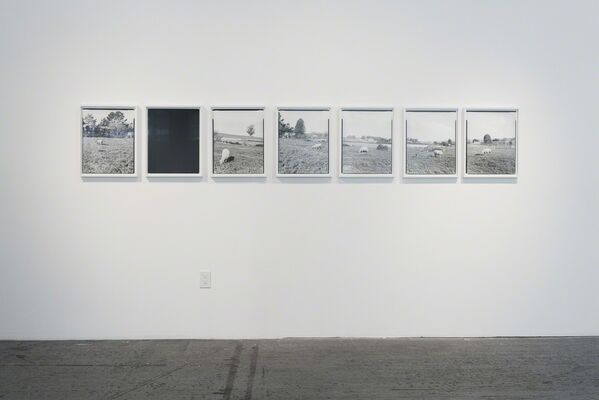 Cloned, installation view