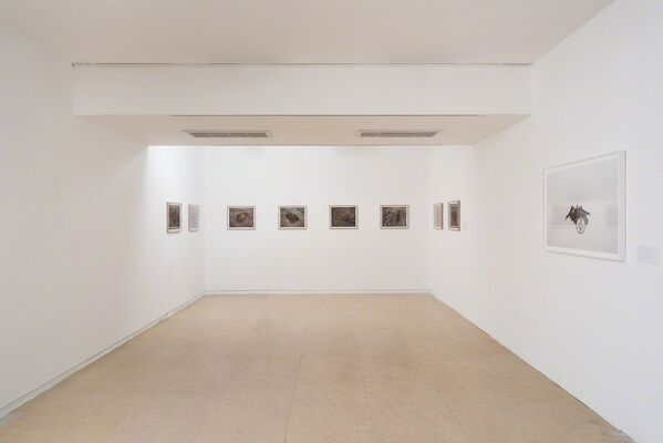 Gaston Zvi Ickowicz: Nesting, installation view