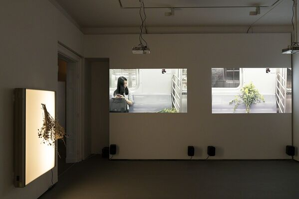 Thomas Taube : The Trope's Trap, installation view