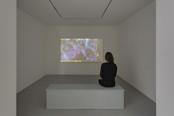 A.K. Burns - Any Means, installation view