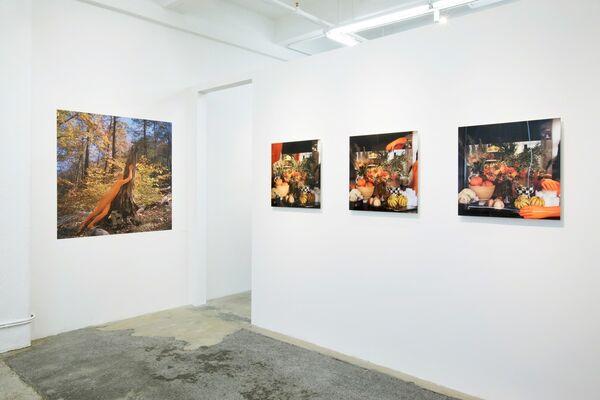 ORCHID.seasons / Matthew Morrocco, installation view