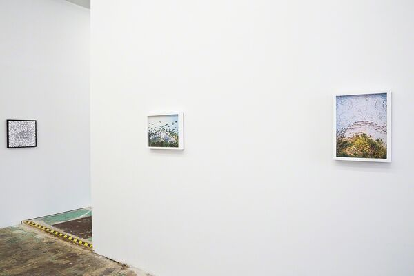Discovery, installation view