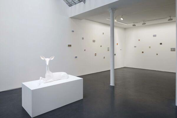 Miguel Branco - Spectres. On Birds, Skulls and Drones, installation view