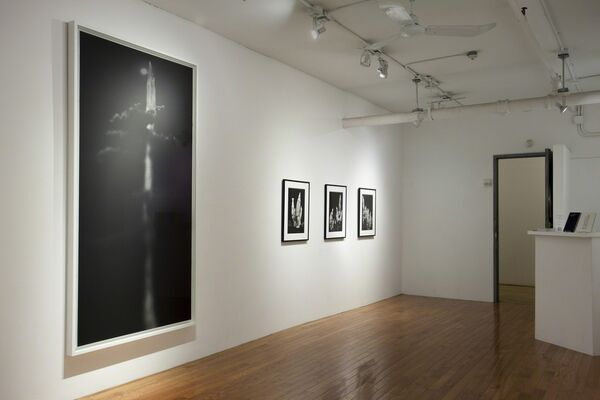 BIANCA SFORNI: Trees from the Pacific Shores, installation view
