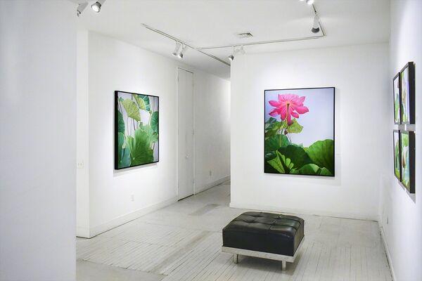 Still | Life | Like, installation view