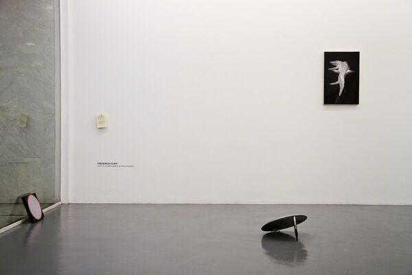 Frederico Filippi: The sun, the albino alligator and other mutations, installation view