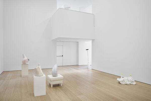 Yes Biological, installation view