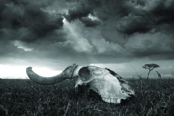 Vanishing Wilds, installation view