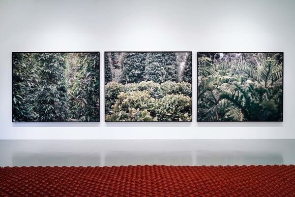The Seeds We Sow, installation view