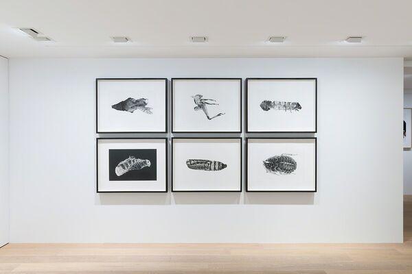 Carsten Höller: Zoology, installation view