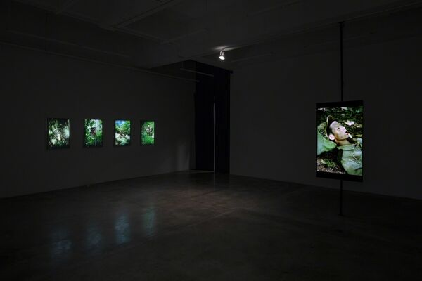 Citizen's Forest, installation view