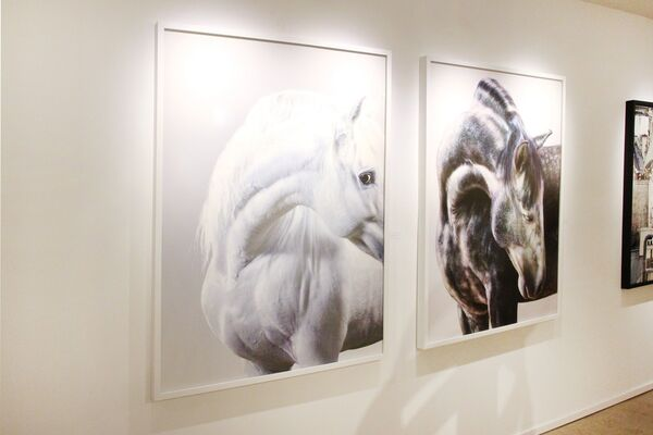 Bau-Xi Artists   Whiteout, installation view