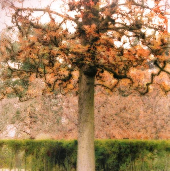 Lynn Geesaman, 'Parc de Sceaux, France (10-08-26c-7)', 2008