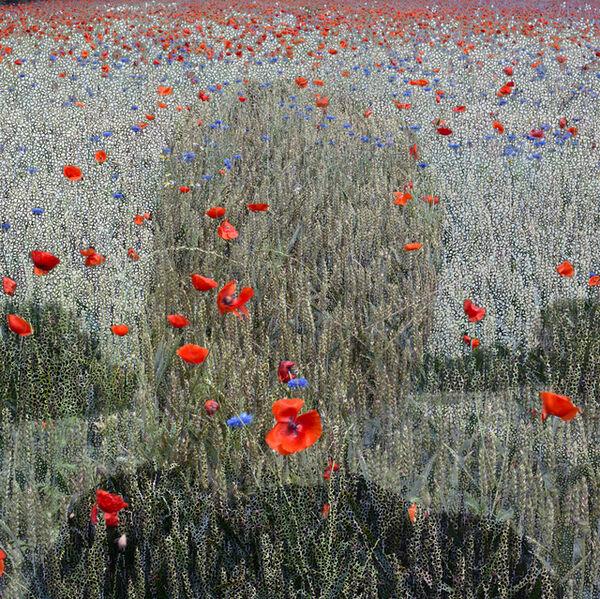 Helen Sear, 'Beyond The View, No. 2', 2009