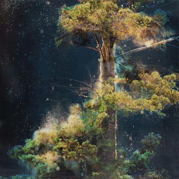 Steven Nederveen, 'Sacred Tree', 2019