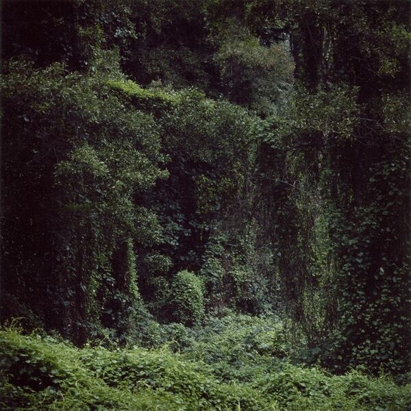 Daniel Gustav Cramer, 'Woodland #56', 2014