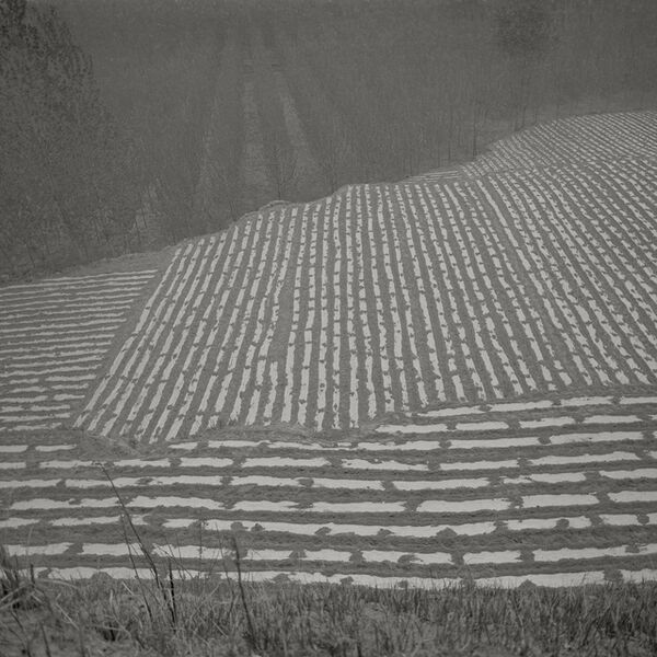 Taca Sui, 'Odes of Chen I - Fields on the Outskirts', 2010