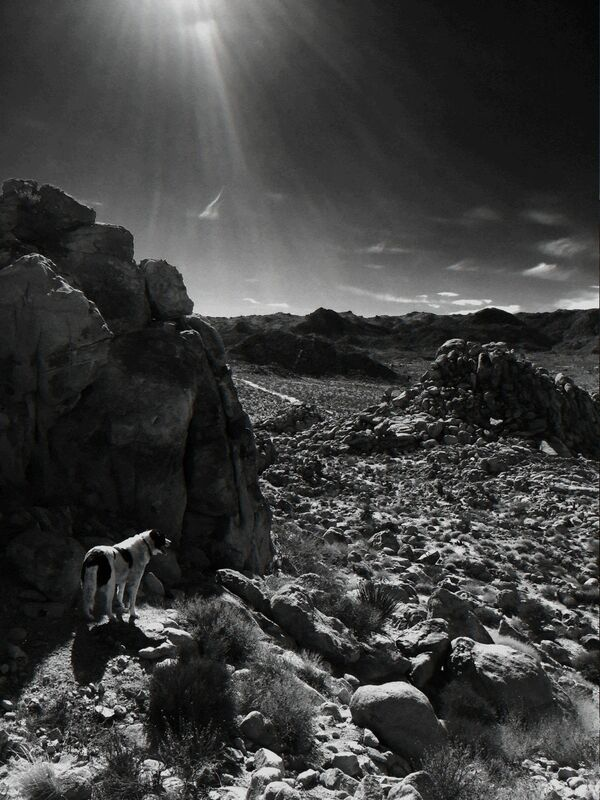 Frederick Fulmer, 'Bongo's World', 2016, Photography, B&W on photo paper, Asher Grey Gallery