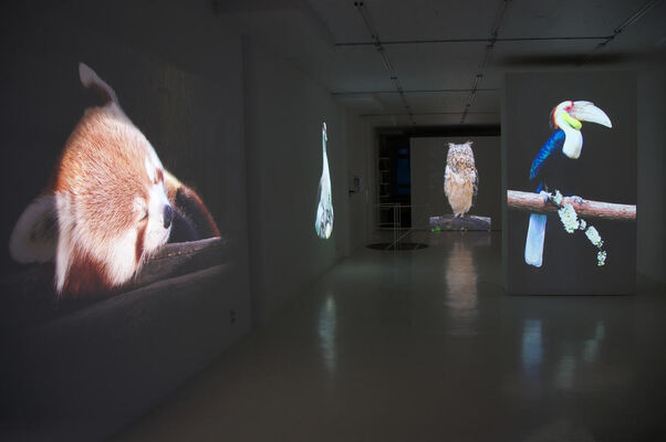 Longing for paradise, installation view