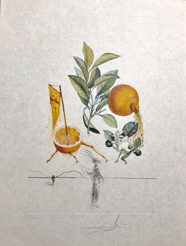 Salvador Dalí, 'Grapefruit', 1969, Drawing, Collage or other Work on Paper, Original engraving + lithograph, Dali Paris