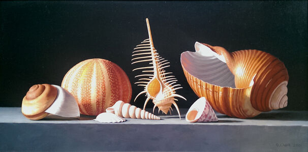 Donald Clark, 'Sea Urchin with Venus Comb and Tonna Shell'