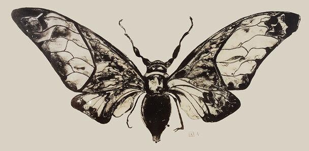 Sarah Graham, 'Salvazana Imperialis (black and white)', 2012