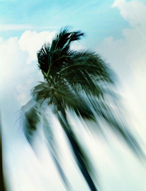 Piotr Uklanski, 'Untitled (Coconut Tree)', 1998, Photography, Chromogenic print, The Metropolitan Museum of Art