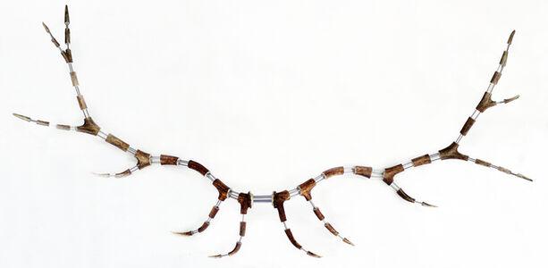 Michael Joo, 'Untitled (Antlers)', 1999