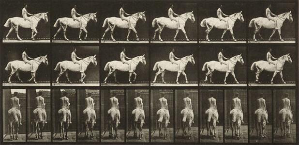 Eadweard Muybridge, 'Plate 581 from Animal Locomotion', 1887