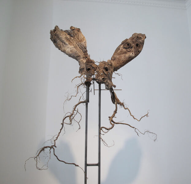 Douglas White, 'Hare', 2009