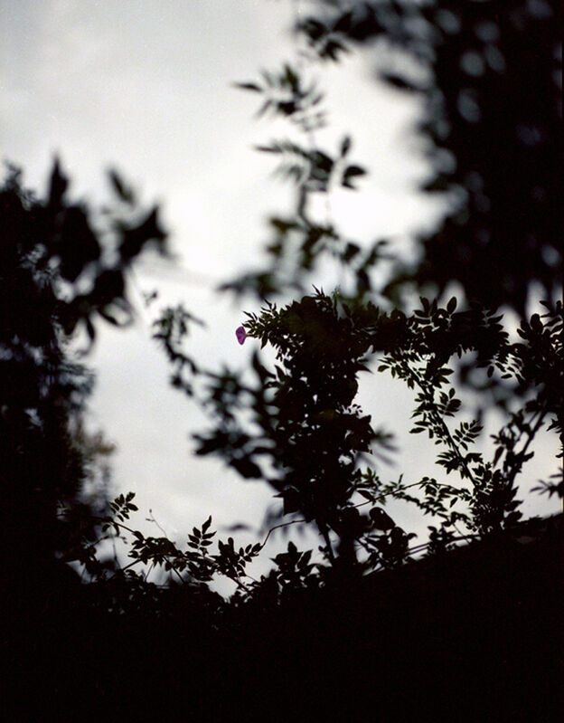 Bryan Graf, 'Wysteria 3', 2011, Photography, Chromogenic Print, Yancey Richardson Gallery